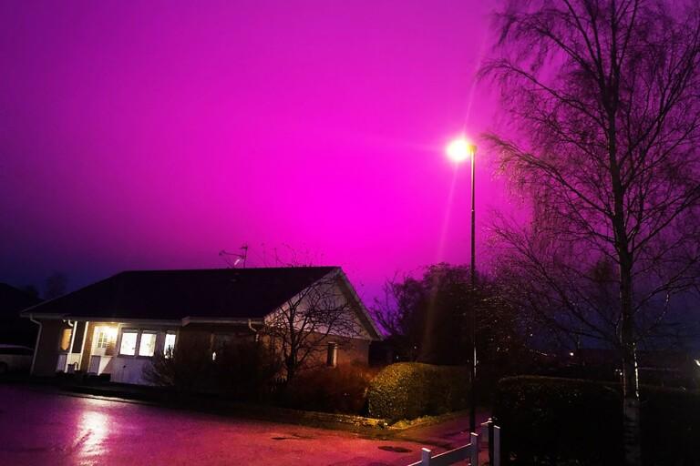 Tomatodlings rosa ljus sprider sig utomlands