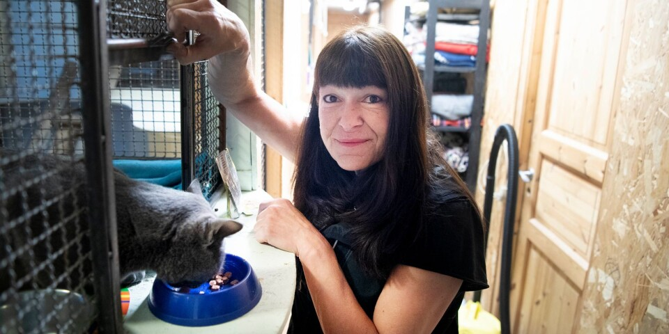 Sussie Paakkinen berättar att det finns åtta kattplatser.