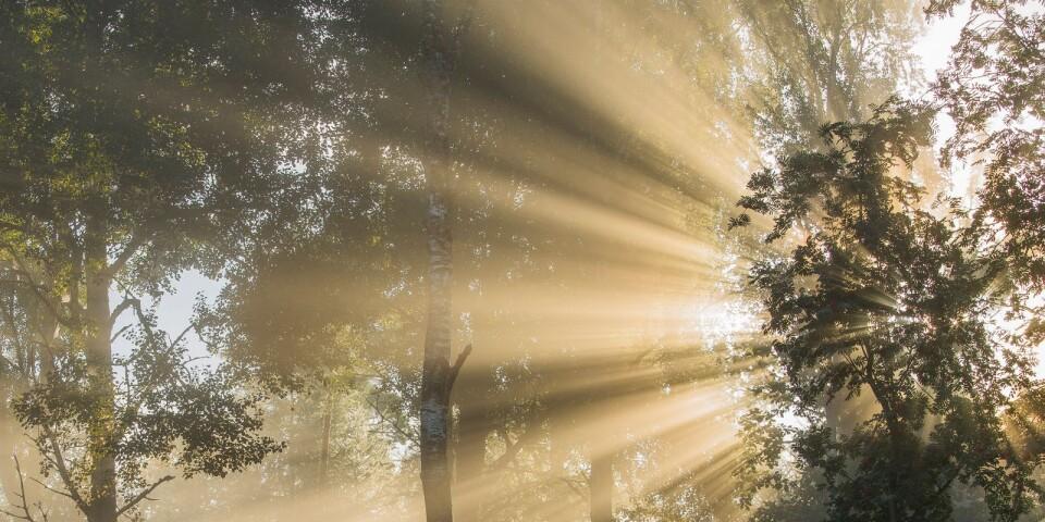 Skog vid Sandstaden i Rottnen. Det gäller att inte skräpa ner när du vistas i naturen.