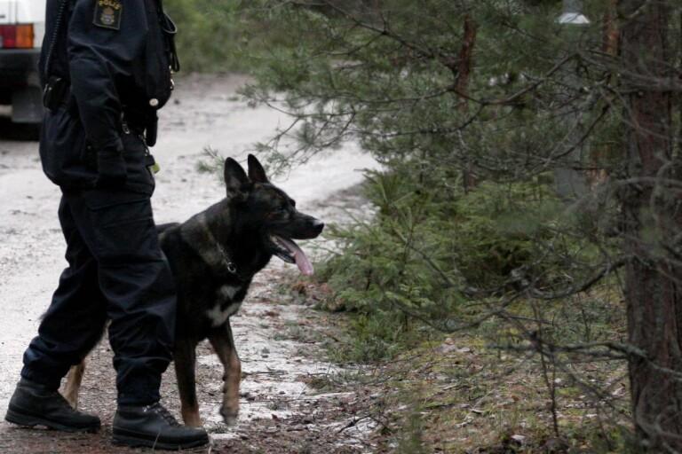 Polis: Polishund nosade upp misstänkt smitare