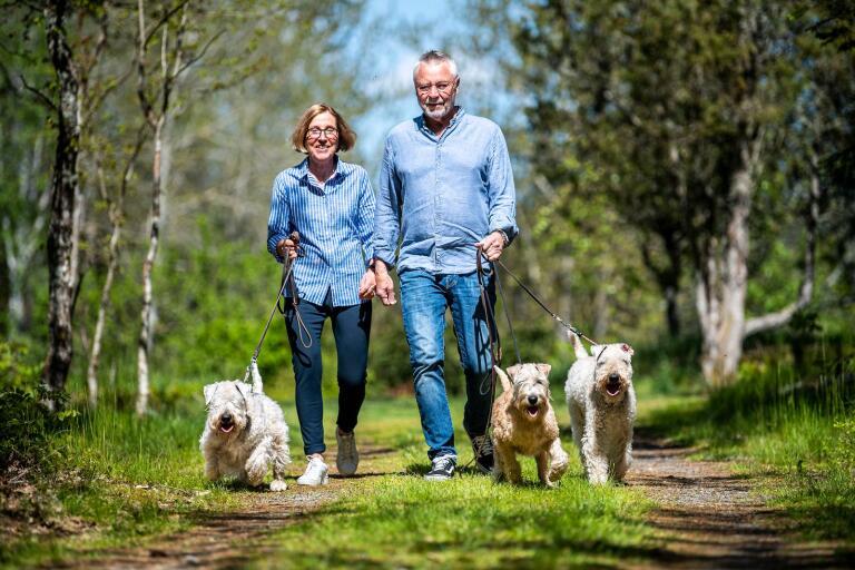 Ove Johansson, ordförande i Blekinge Kennelklubb, och Christina Johansson har fött upp Irish softcoated wheaten terrier i ett flertal år. Nessi, Inez och Kima är härligt sällskap och får husse och matte att röra på sig ordentligt – i ur och skur.