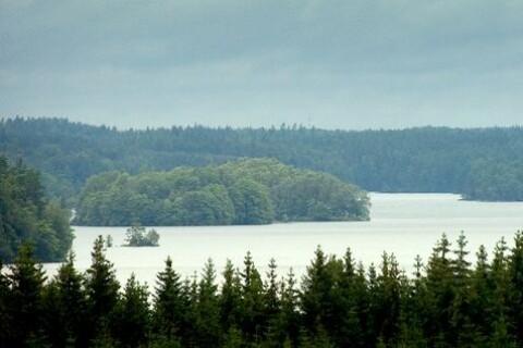 """Skogsindustrin lär pekas ut i rapport om Immeln: """"Det är lite tabu"""""""