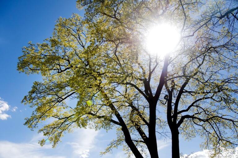 Väder: Bitvis blöt måndag men solen kommer tillbaka