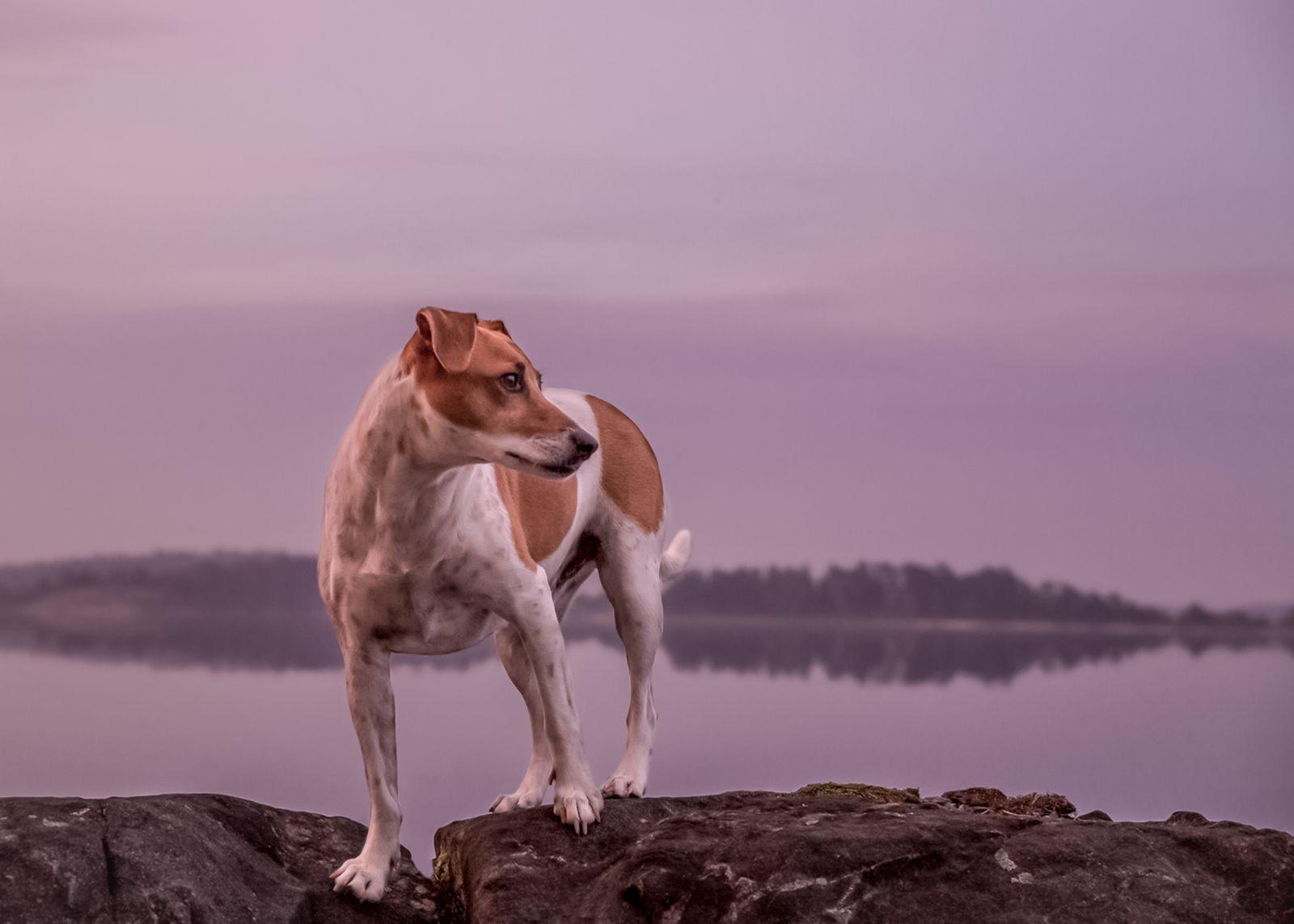 """""""Hunden heter Kimbo och är min sons hund. Bilden är tagen en underbar kväll ute på vårt sommarställe, Lilla Rätö"""", hälsar Veronica Forsberg."""
