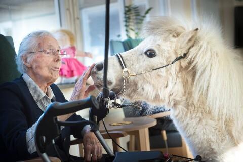 Ponnybesök på äldreboende – fick en del att gnugga ögonen