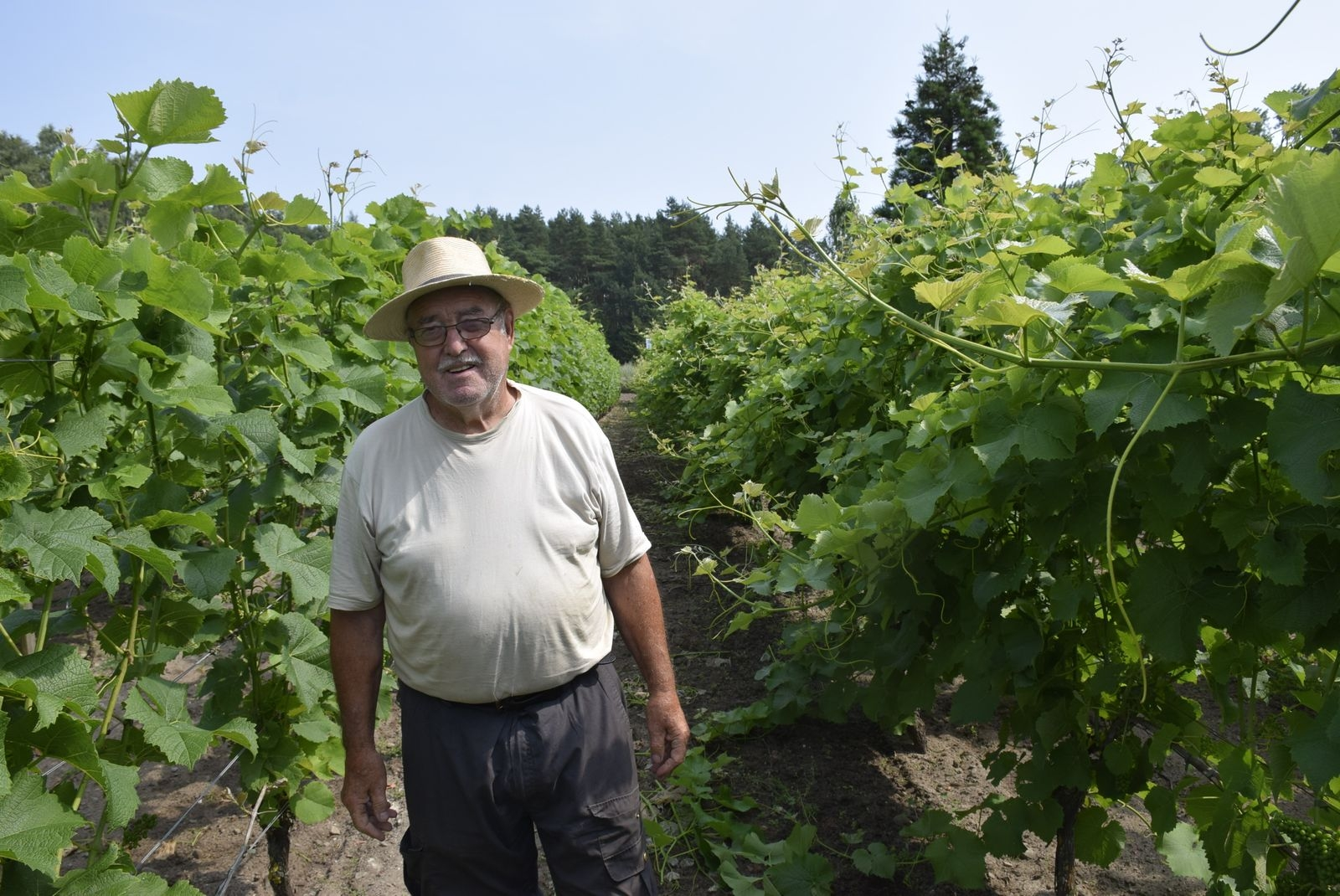 Svenska vinodlingens grand old man startade jakten på lämpliga druvor med hustrun Anita i egen båt genom Europas nordliga vindistrikt redan på 90-talet.