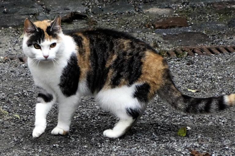 En man har dömts för att ha fångat in och fört bort en katt. Katten på bilen har inget med texten att göra. Arkivbild.