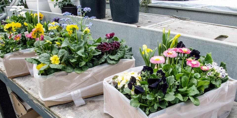 De vackra blomsterlådorna är populära bland kunderna.