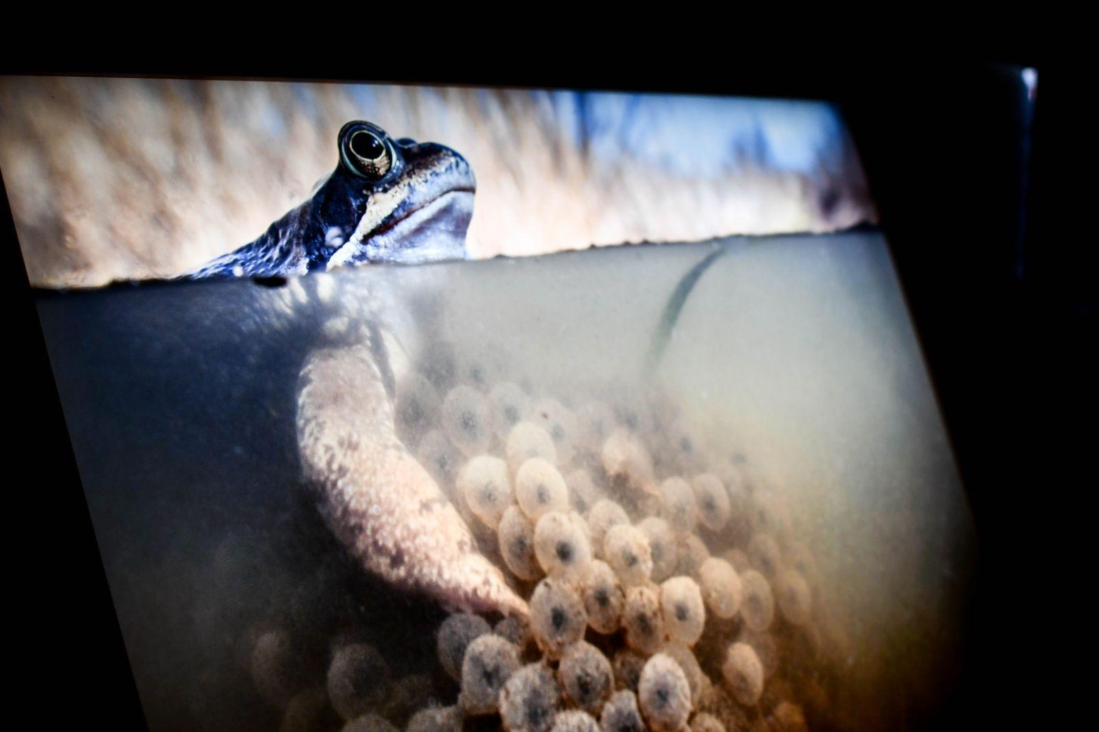 Rummet ger känslan av att befinna sig nere i vattnet, under de stora näckrosorna som svävar uppe i taket. Johan Hammars fängslande fotografier visas på upplysta skärmar.